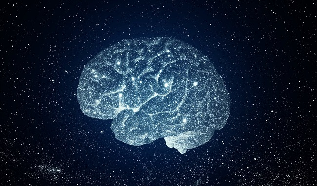 brain_novo